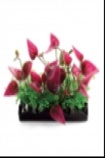 Композиция 1146LD из аквариумных растений, 80мм, (пакет)